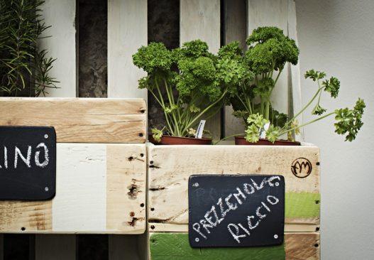 L'orto urbano di Mangia la foglia bio